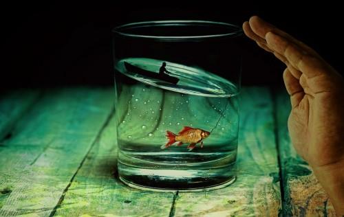 Water Glass Angler Fish Goldfish Surreal Miniature