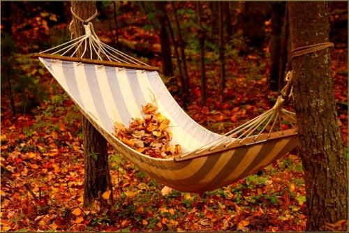 #Swing #Autumn #season