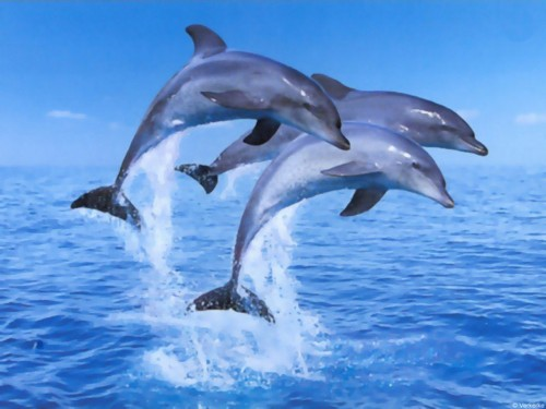 Dolphins makes you happy all the time.