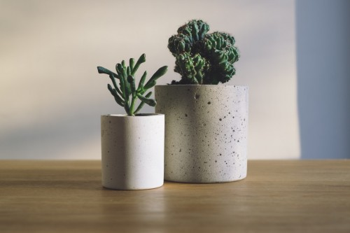 Photography Of Potted Plants