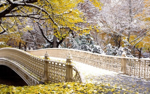 Fall Central Park New York