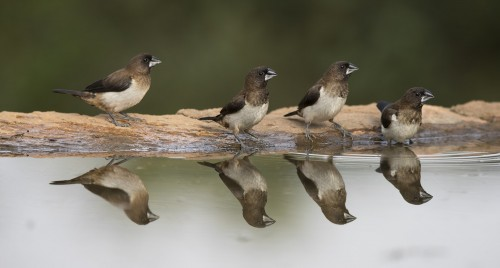 Four Birds And Reflections