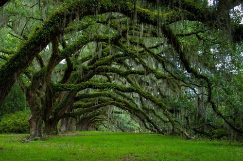 Stunning-Tree.jpg