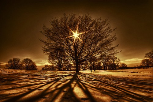 TreeofLight.jpg