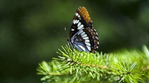butterfly7e1ba.jpg