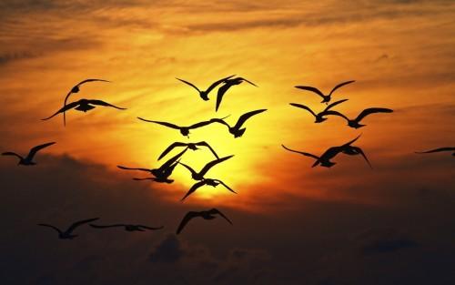 Birds Silhouette Sunset Wings Fly Sky