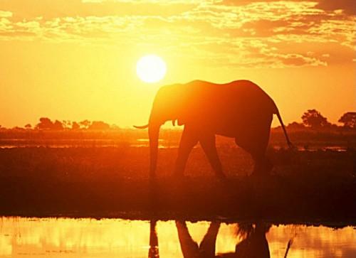 elephantandsunset.jpg