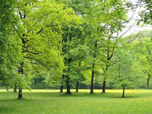 gardengreen.jpg