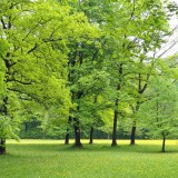 gardengreen