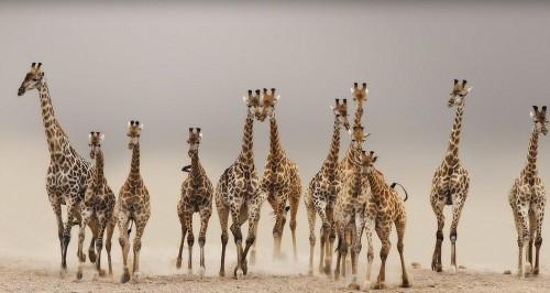 giraph.jpg