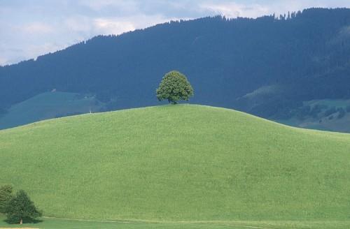 landscape-005xv.jpg