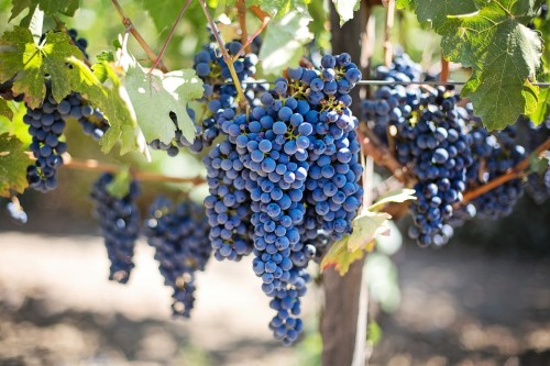 purple-grapes-553464_1280.jpg