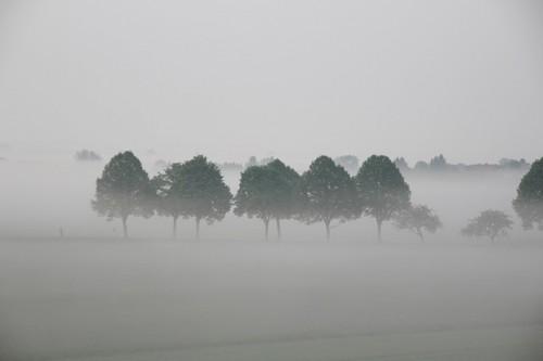trees-616063_640.jpg