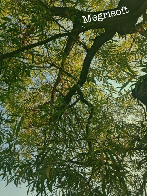treesky.jpg